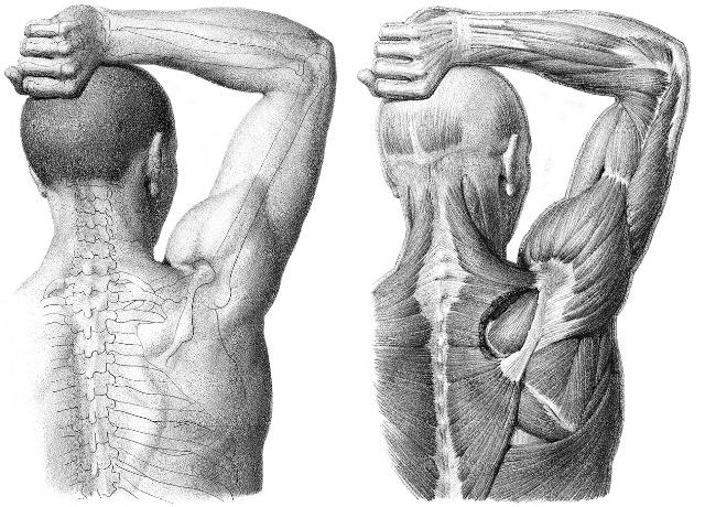 Dolor en el hombro