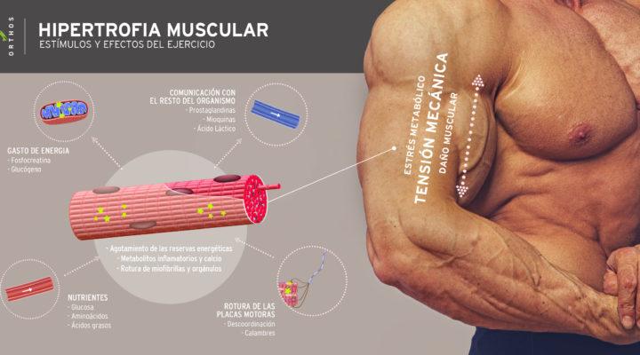 ¿Quieres conseguir hipertrofia muscular?
