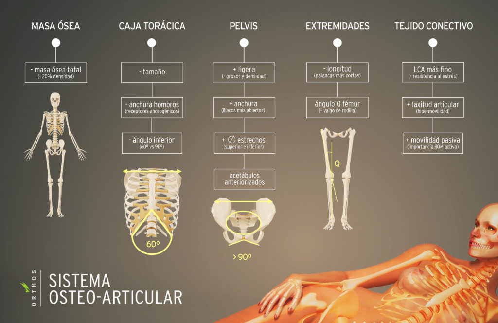 Esqueleto de la mujer: cosas que no sabías   ORTHOS