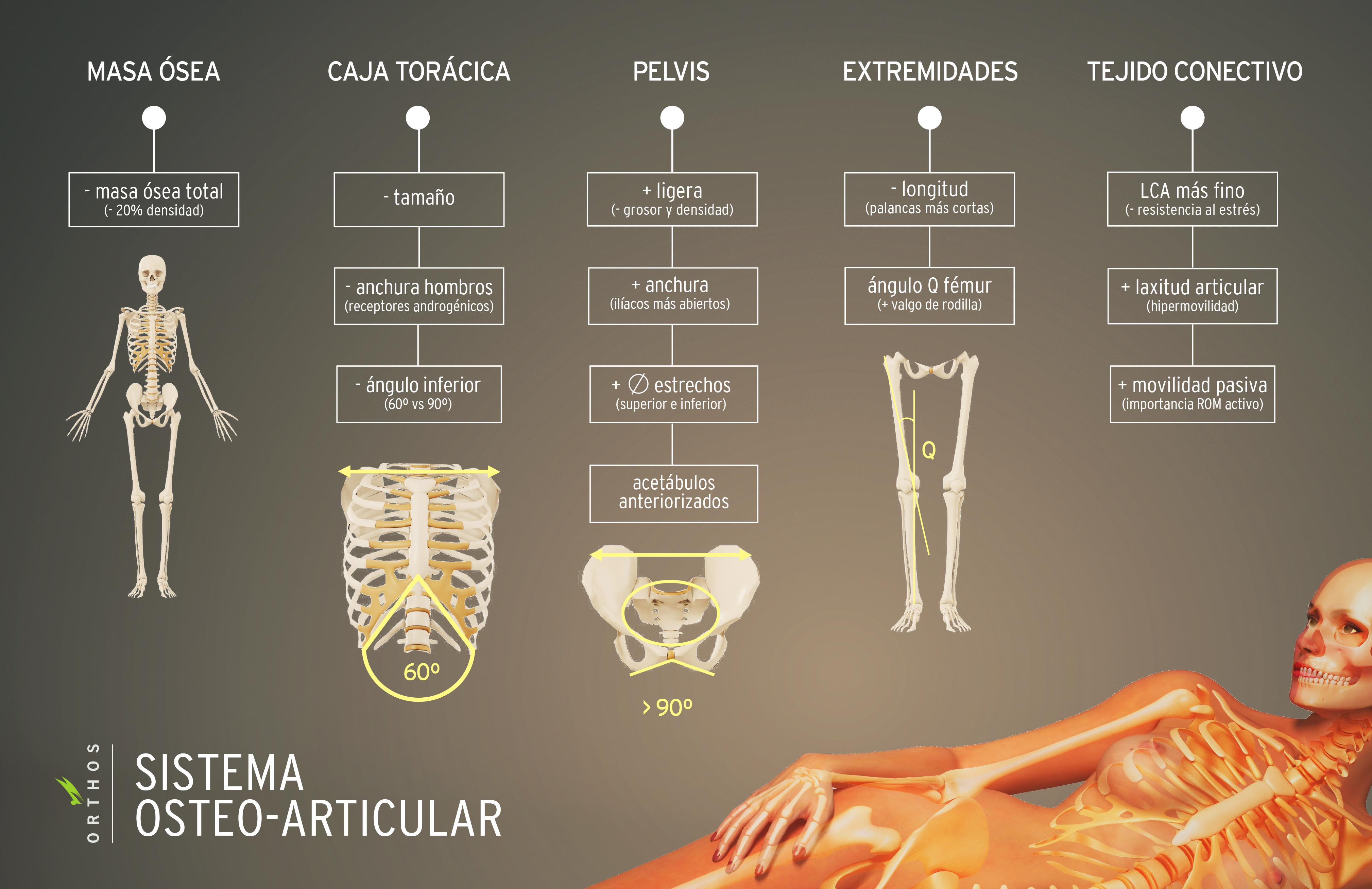 Enseñanza Orthos. Escuela de formación deportiva. Diferencias en el esqueleto de la mujer y el hombre