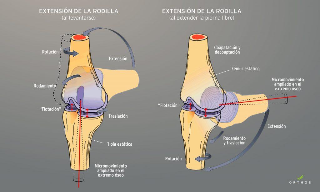 Enseñanza Orthos. Escuela de formación deportiva. Osteopatía y rendimiento físico