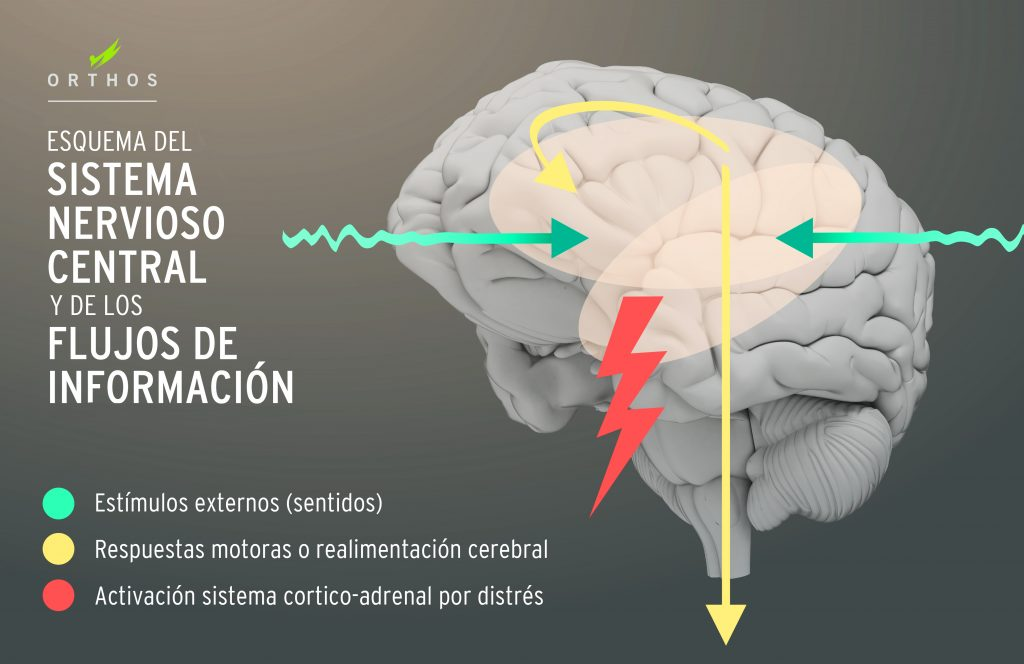 Enseñanza Orthos. Escuela de formación deportiva. Cuerpo sano en mente sana. Estrés