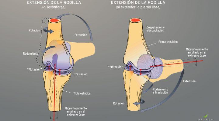movilizaciones-osteopaticas-osteopatia