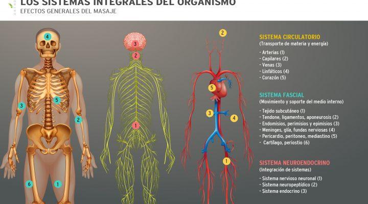 sistemas-integrales-del-organismo