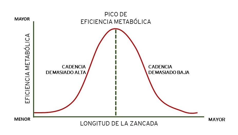 curso TÉCNICA DE RUNNING - Orthos - Cursos ONLINE - Claudio Caamaño