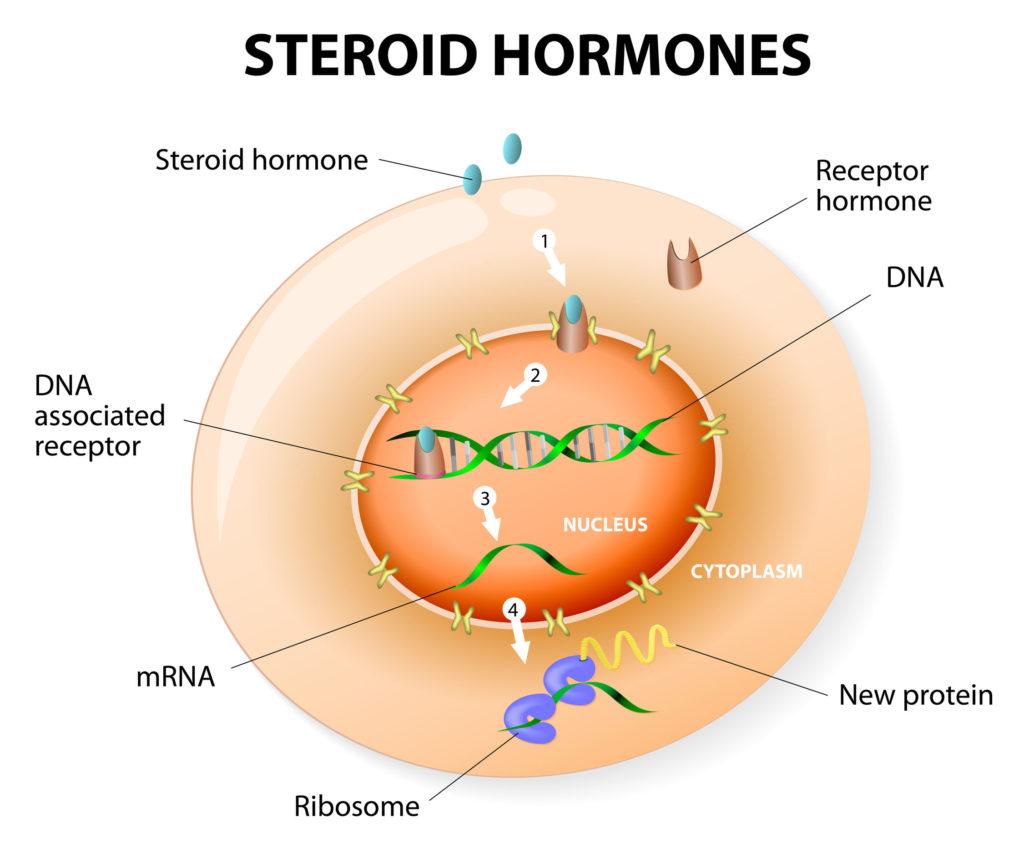 infografia-funcion-esteroides-anabolizantes
