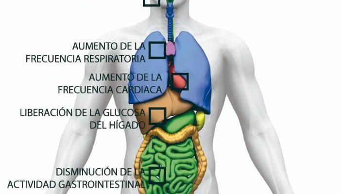 sistema-nervioso-simpatico-masaje-efectos-estimulantes